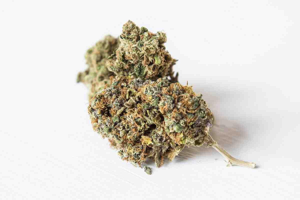 Quelle est la meilleure herbe CBD à fumer ?