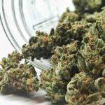 Quelle fleur CBD fumer ?