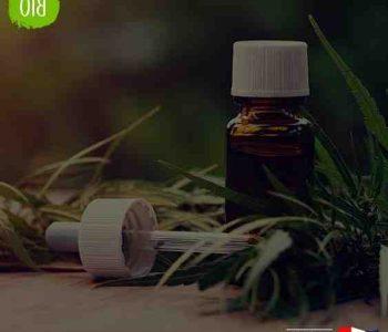 Où trouver de l'huile de CBD en France ?